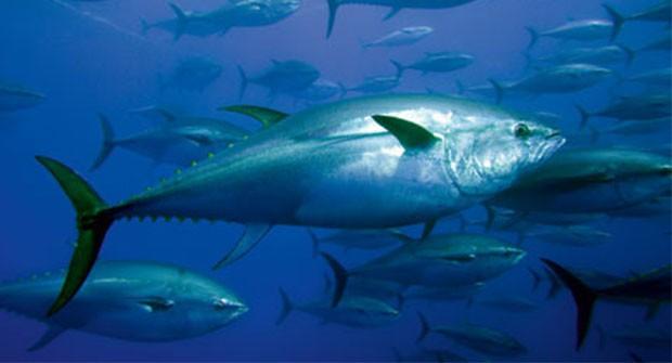 ΦΕΚ: ηλεκτρονικό σύστημα για την έκδοση και διακίνηση του εγγράφου αλιευμάτων τόννου (e BCD)