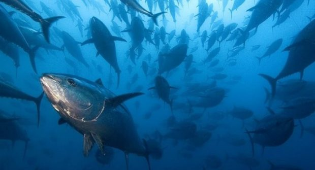 Διακοπή Αλιείας Τόννου (BFT) λόγω εξάντλησης Εθνικής Ποσόστωσης