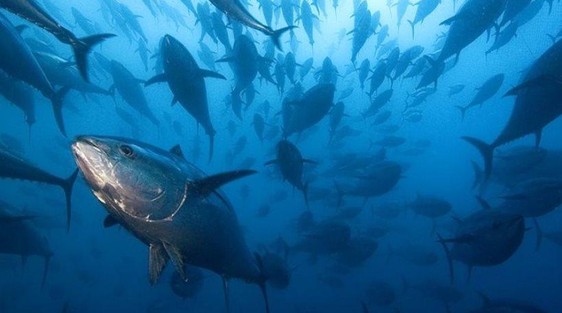 ψάρια-μεσόγειος
