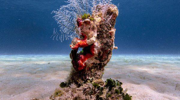 Θάλασσες: Ποιος θα μας σώσει από τους «προστάτες» τους
